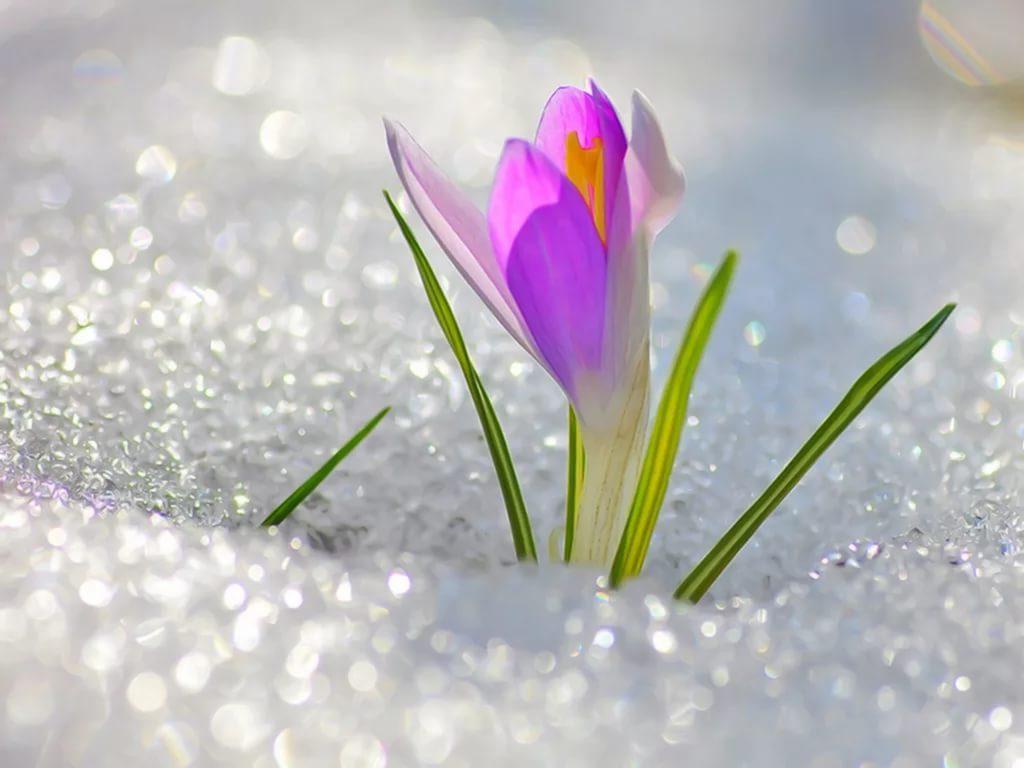 первые дни весны