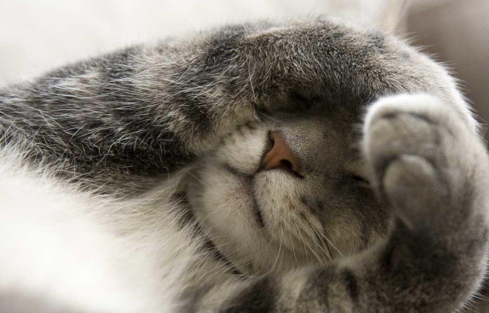 Kitten-covering-eyes_dreamstime_9642879-1000x641