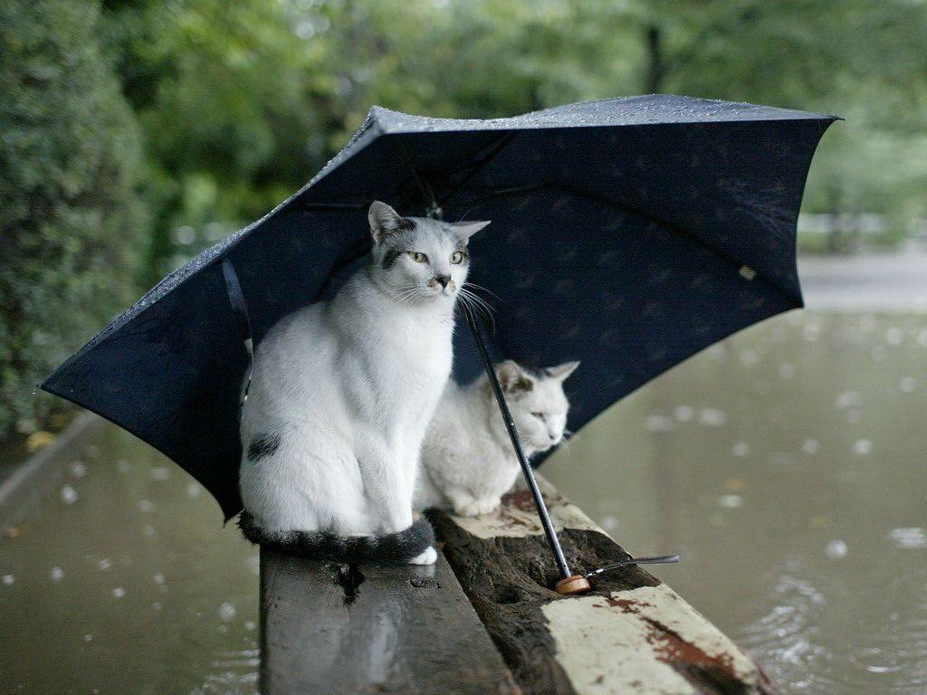 Кратковременные дожди ожидаются на этой неделе в Лиде